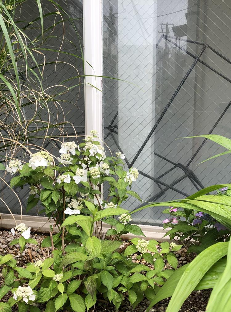 山野草の箱庭