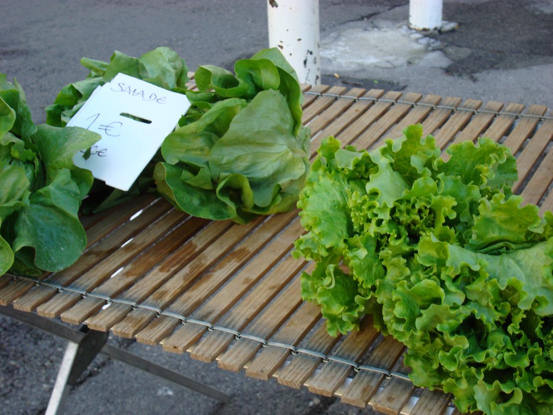 サラダ菜を並べた簡易テーブル